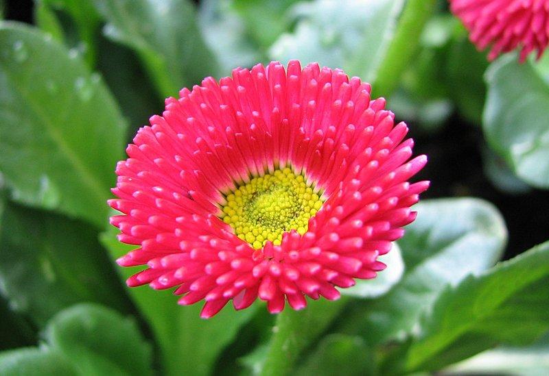 Mar_10_0031_pink_flower