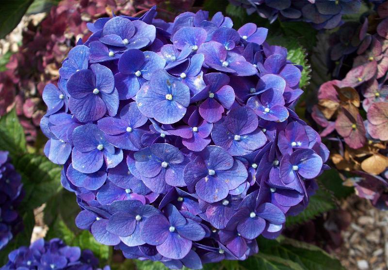 4-flower
